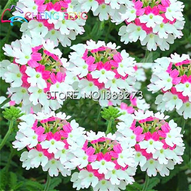 30 Pcs Um Saco De Sementes Pokemon Lantana Plantas Em Vasos E Jardins De  Flores Perenes