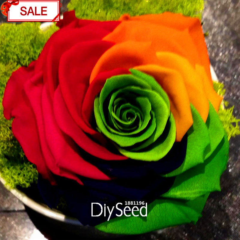 New Fresh Seeds Crazy Promotion Rainbow Rose seeds DIY