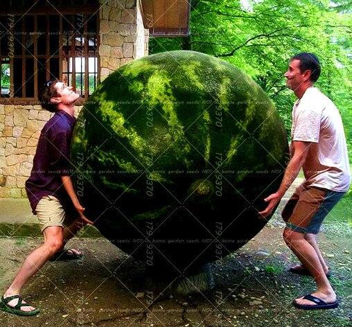 Super 30 stücke Riesen Wassermelone Süße Geschmack Gemüse Und Obst @VO_47