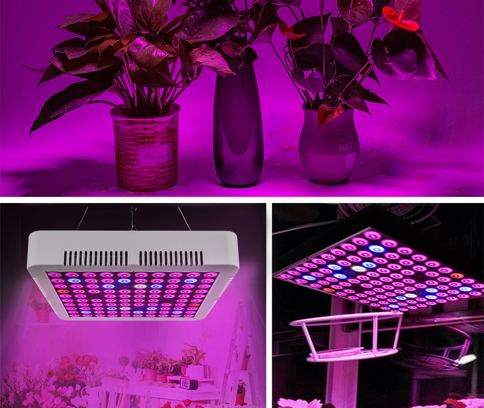 300W Full Spectrum LED Plant Grow Light Lamp For Plant Indoor Nursery Flower Fruit Veg Hydroponics System Grow Tent Fitolampy (15)