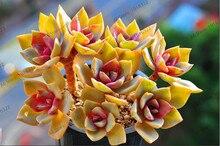 207pcs/bag mix lithops seeds rare succulent seeds Ass flower seeds  Living Stone bonsai mini garden plant.