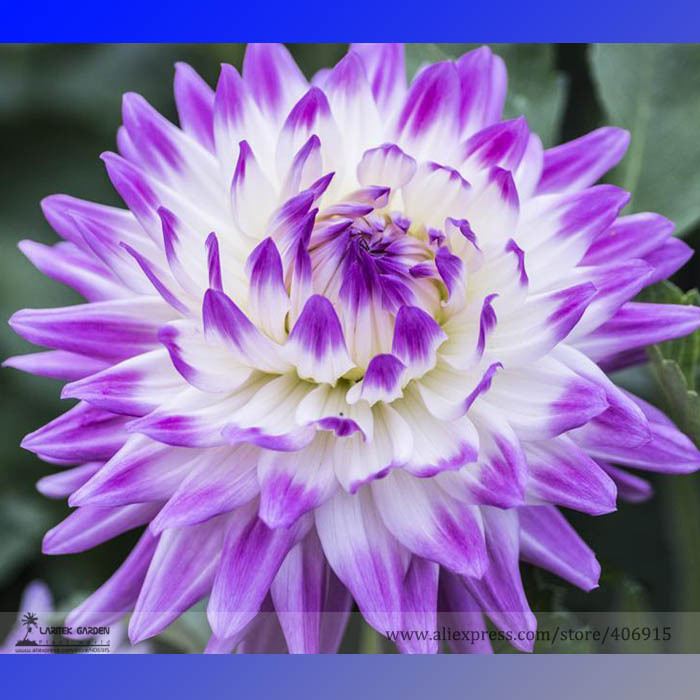 superb different types of flowers Part - 7: superb different types of flowers great pictures