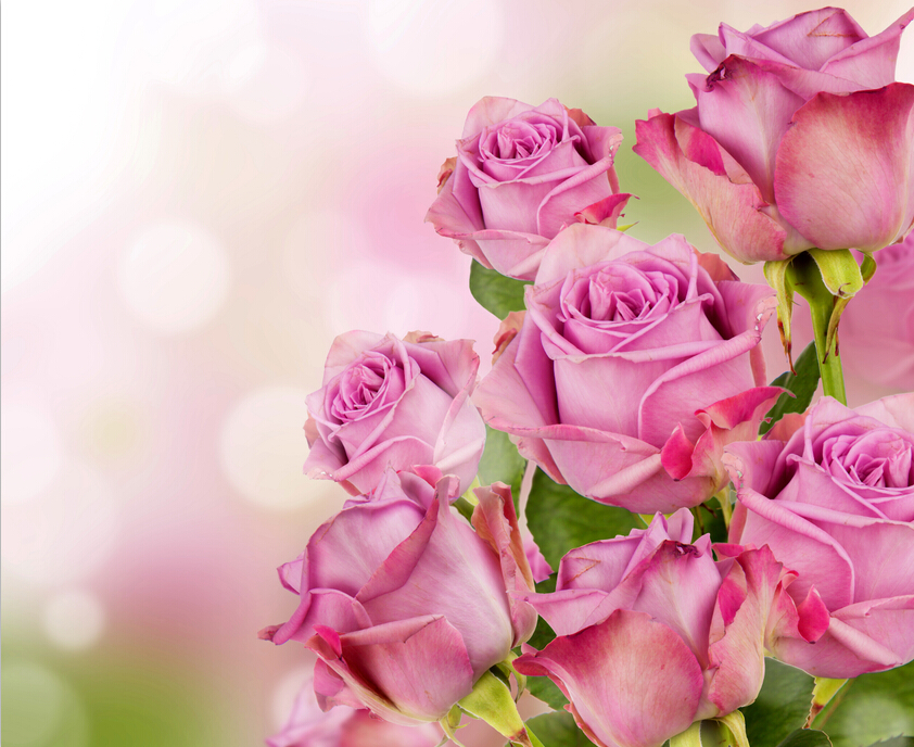 Custom 3d Muralsbeautiful Pink Color Roses Flowers Wallpapers