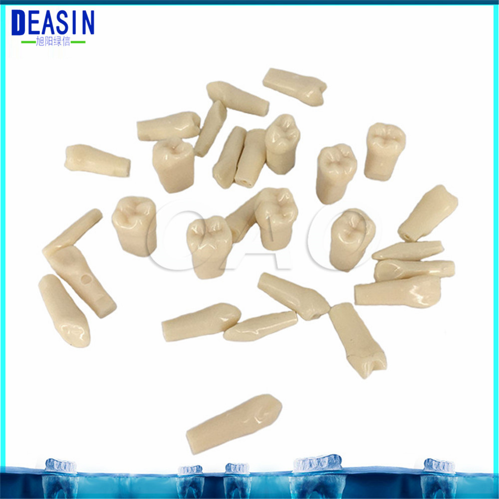 Adult Permanent Teeth Models Full month Dental gift 28pcs Dental Tooth Preparation Model Tooth Teaching Model Tooth Grain