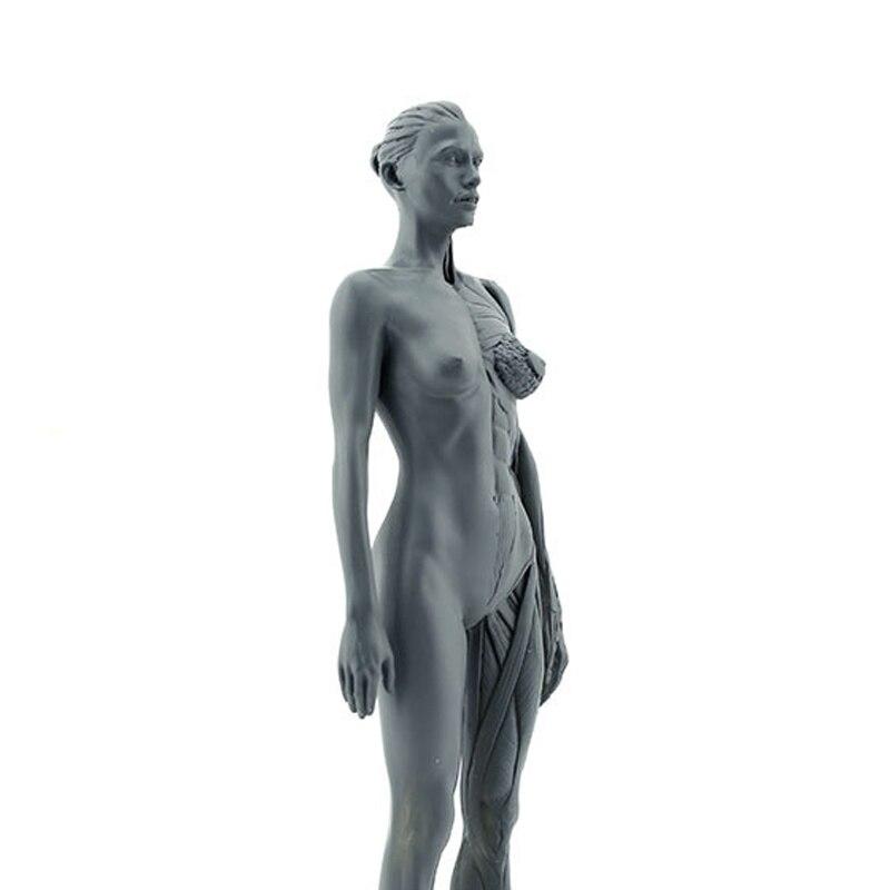 Sintetic Resin Medicină Femeie Modelul corpului uman Predarea - Materiale școlare și educaționale - Fotografie 6