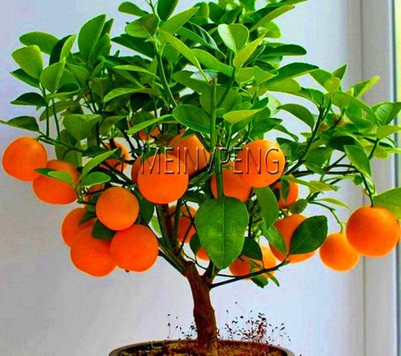 Новое поступление! 4 вида фруктов, фруктовое дерево бонсай карликовые деревья, овощей и фруктов сад завод восхитительное Яблоко оранжевый к...