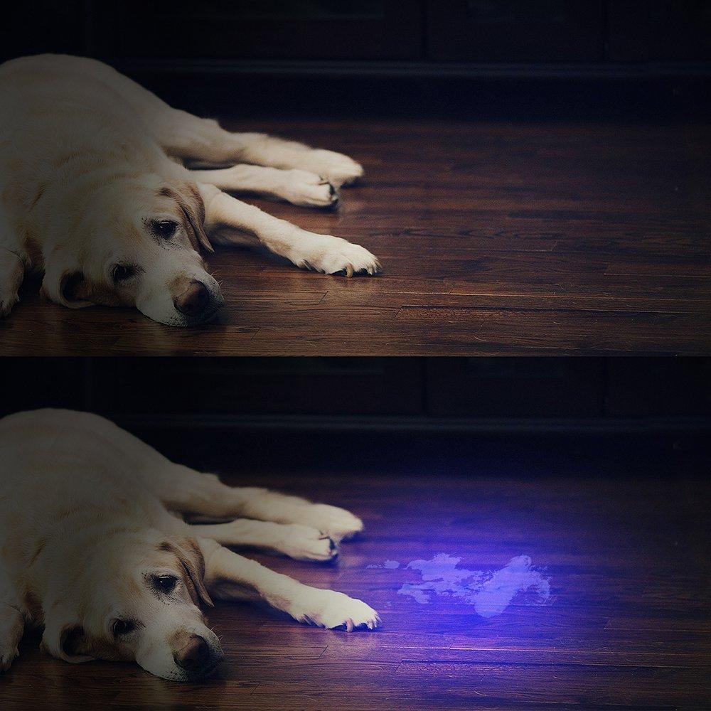 21led uv blacklight flashlight (4)