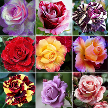 5D DIY Diamond Painting rose Flower &Strawberrie Embroidery Cross Stitch Rhinestone Mosaic