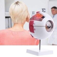 Modèle de globe oculaire naturel anatomique humain instrument denseignement daide à lapprentissage médical