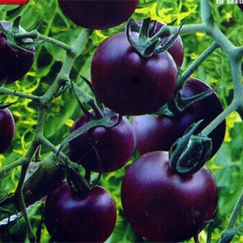 Mix Colors Tomato Seeds, 200pcs/pack