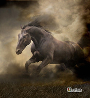 Buy art printing canvas horse prints mordern style of picture beautiful decorative picture / 24''x24