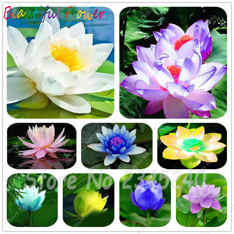 best top indoor water plants brands and get free shipping - 890k01cl