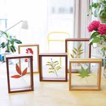 Natural Wooden Plants Specimens Decorations