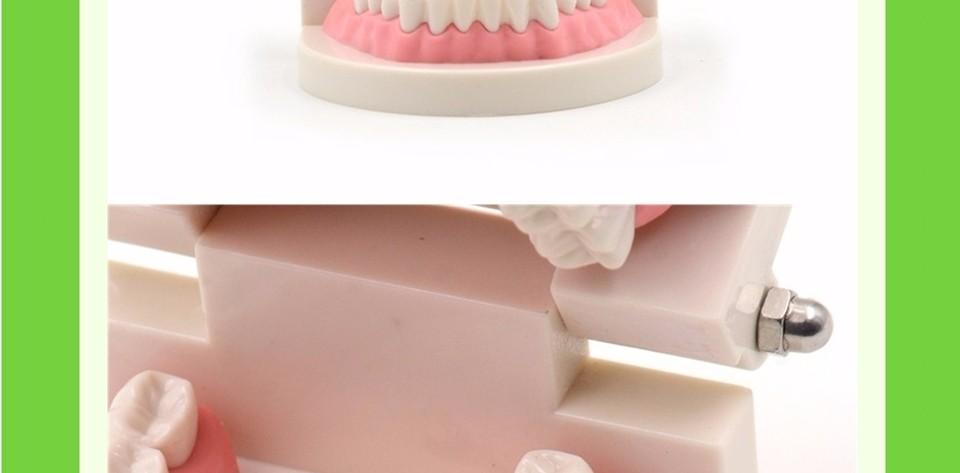 Teeth Model0000008