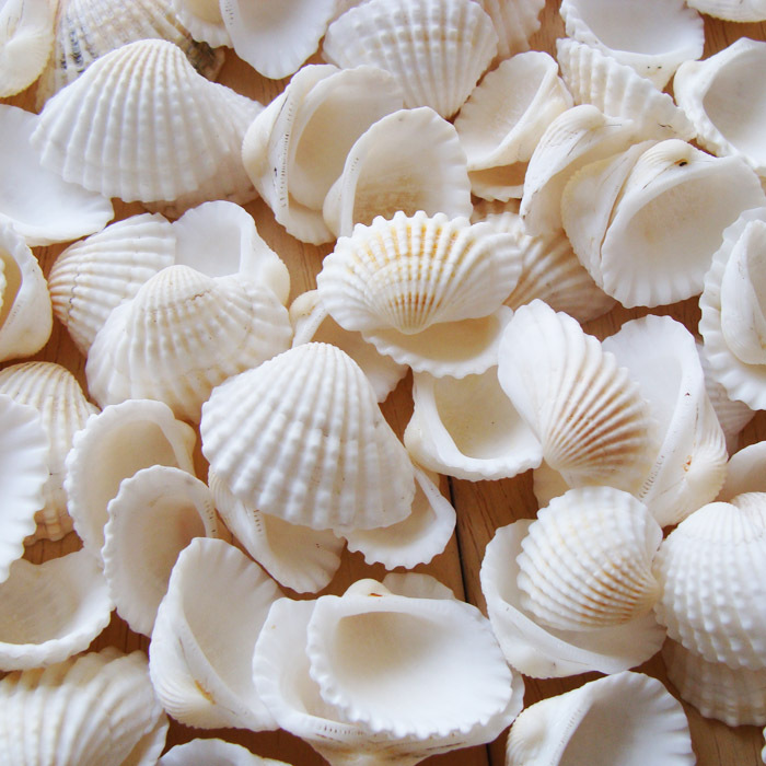 Online buy wholesale seashell crafts from china seashell for Large seashells for crafts