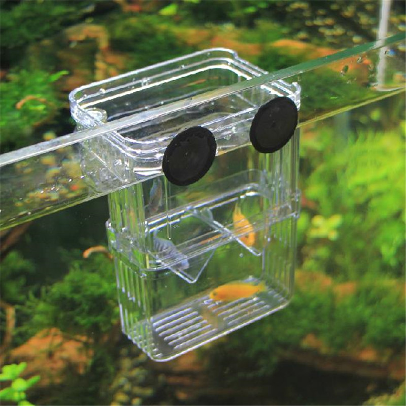 Size L High Clear Fish Breeding Box Aquarium Breeder Box Double Guppies Hatching Incubator Isolation(New Acrylic) ...