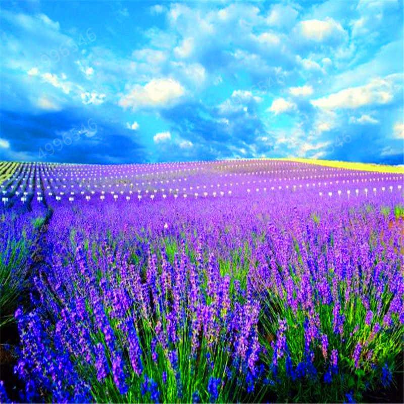 200 قطعة الخزامى Angustifolia بونساي المستوردة الفانيليا جميلة زهرة اللافندر النباتات في الهواء الطلق ل ديكور حديقة المنزل