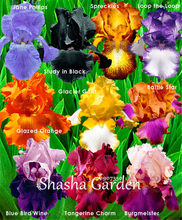 50 pcs Bonsai Bearded Iris Flower Rare Orchid flower Bonsai Potted Plants Orquideas Flore Potted plant DIY Garden Decoration(China)