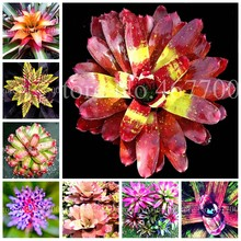 100 Pcs Bonsai Colorful Bromeliad Bonsai Plants Vegetable Fruit Garden Succulent Mini Cactus Pots Rainbow Children Potted Flower(China)