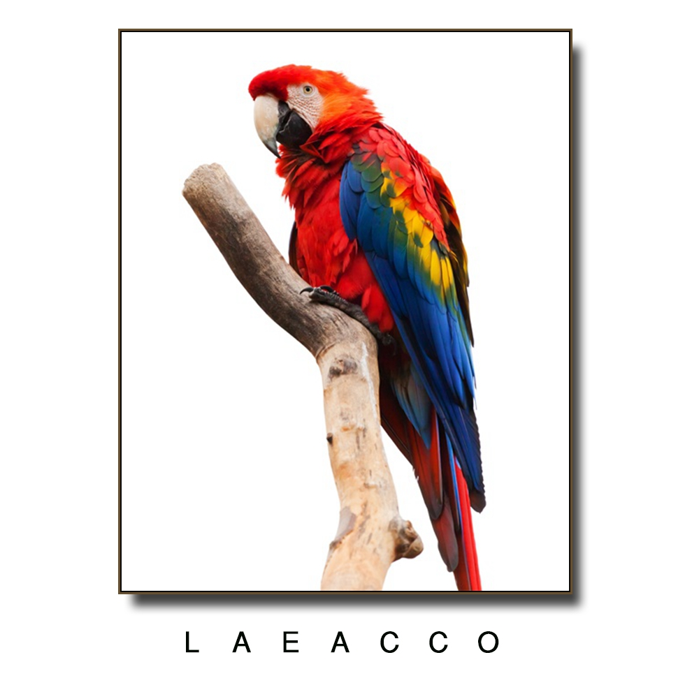 Colorful Parrot Canvas Painting