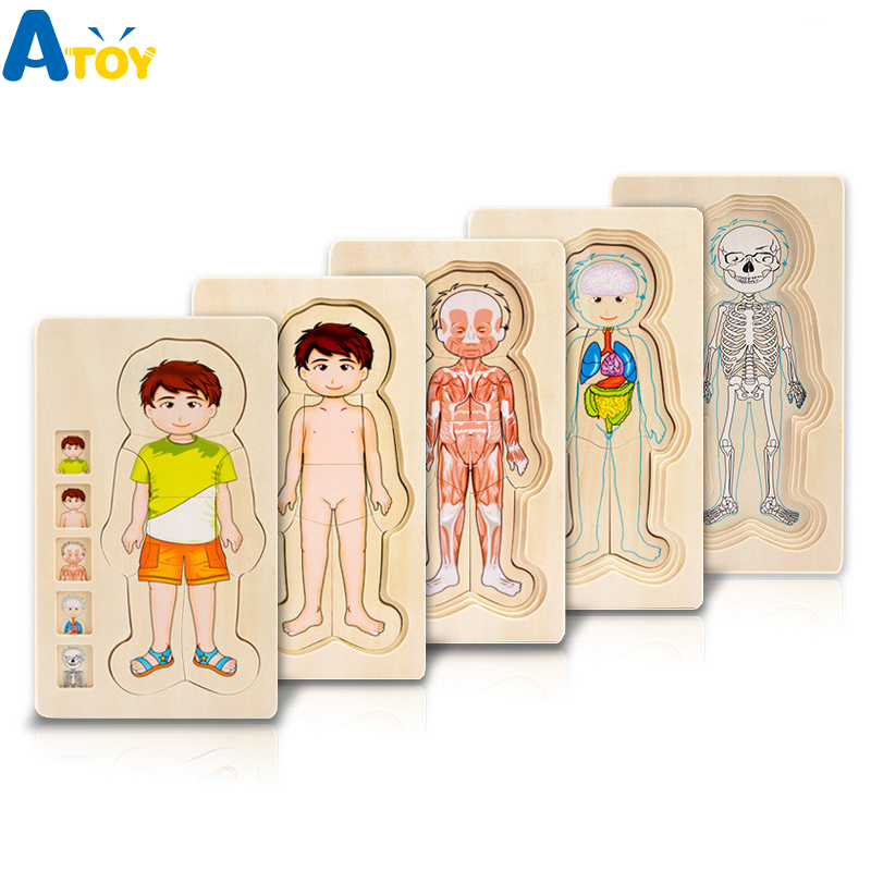 Children Educational Toys Wooden Human Body Puzzle Boys Girls Body Structure Multi-layer Children Puzzles Kids Educational Toys