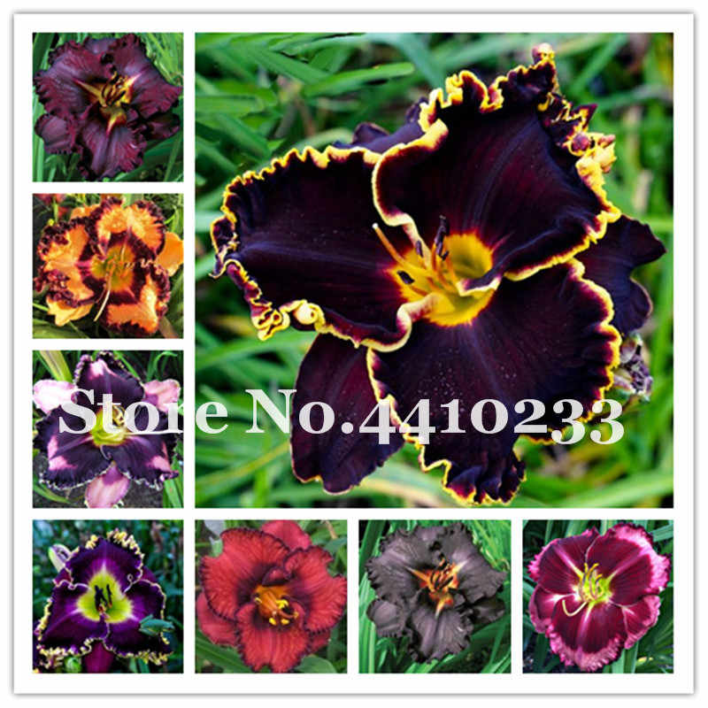 Hot Sale! 120 Pcs/Lot Hybrid Daylily Flowers Bonsai Plant Colorful Hemerocallis Lily Indoor Bonsai Diy Home Garden Supplies