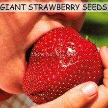 300 Benih / Pek hanya $ 1.00 / Pek, Super Giant Strawberry Seed Seed Apple Saiz # NF349