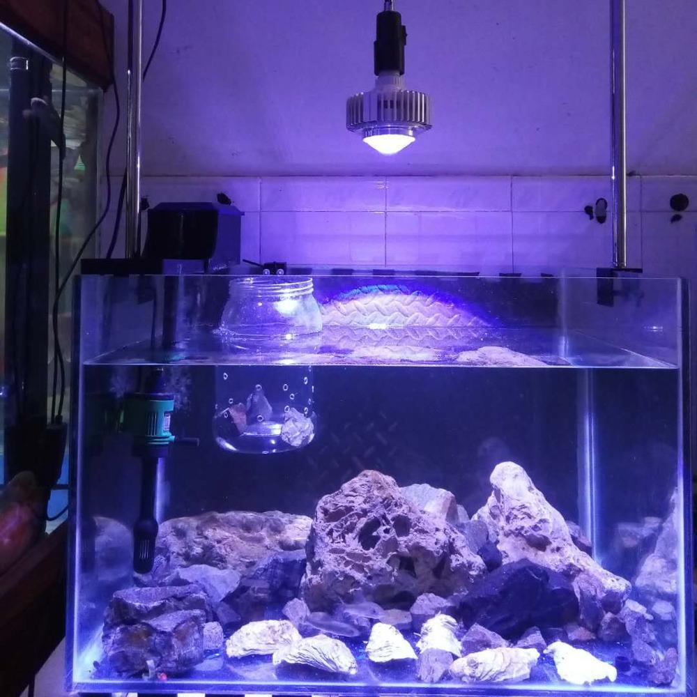 2 pcs/lot personnaliser couleurs CREE LED Aquarium lampe Aquarium Aquarium ampoules récif corail lumière pour eau salée Marine SPS LPS poissons plus frais
