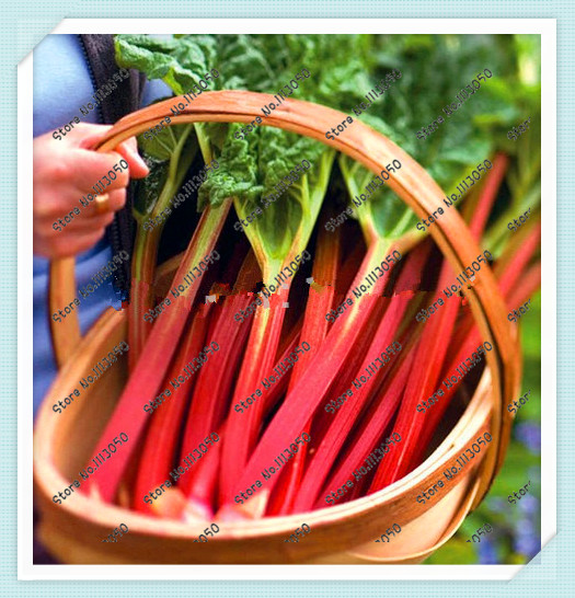 100pcs/bag Rhubarb Victoria Vegetable Seeds , Under The Sun Seeds