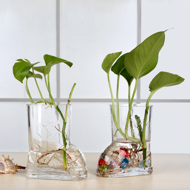 Transparent glass trumpet vase hydroponic green radish plants flower hotel co - Vase plat centre de table ...