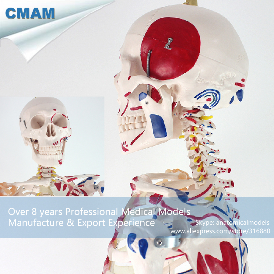 Fantastisch B Medizinische Wissenschaft Anatomie Ideen - Anatomie ...