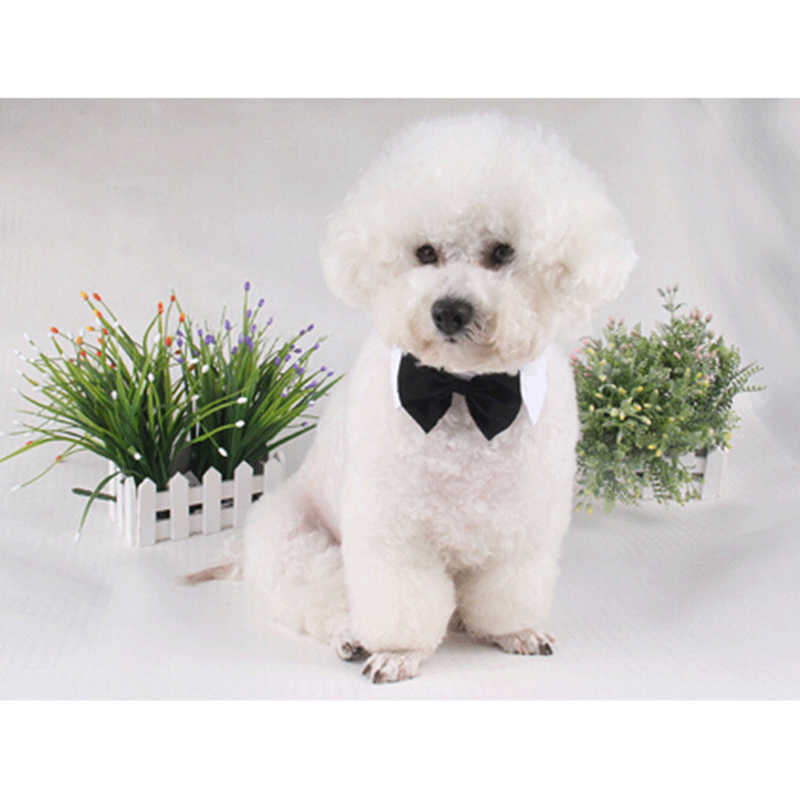 2019 Dog Cat Bow Tie Groom Costumes Collar Pet Dogs Tie Wedding Party Necktie Accessories Grooming Black Bowtie Pet Product