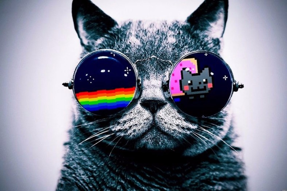 1103 cool macro nyan cat glasses wall sticker art poster for home
