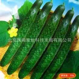Noord Agrarische Tonen Goede Groente bonsai Komkommer bonsai 20 stks