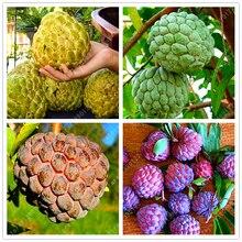 10 pcs Soursop Seeds, (graviola annona muricata), Multi-color sweetsop seeds Delicious fruit seeds sugar apple plant in bonsai