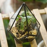 Bonsai Modern Glass Geometric Terrarium Flowerpot Tabletop Succulent Fern Moss Box Diamond Transparent Pot for Home Garden Decor