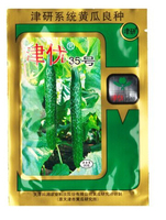 1 Original Packing, Original China JinYou35 Cucumber Seeds Fruit Cucumber,Vegetable seeds, 20G seeds per pack