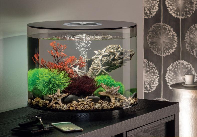 хотел виды аквариумов для дома фото месте укола