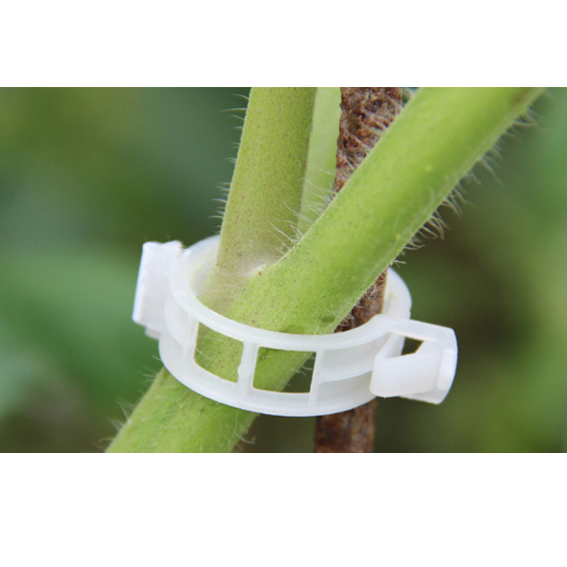 Image 5 - 50pcs Tomato Clips Trellis Garden Plant Flower Vegetable Binder Twine Plant Support Greenhouse Clip Supplies-in Fencing, Trellis & Gates from Home & Garden