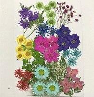 Các loại Khô Ép Hoa + Leaf Lá Cây Herbarium Đối Với Trang Sức Khung Ảnh Trường Hợp Điện Thoại Craft Làm DIY-DH015