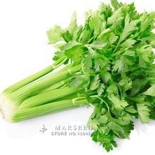 Marseed Grow Heirloom 1000 Celery Vegetable Seeds Impressive Rustic Garden