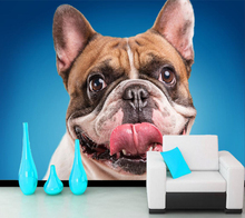 Dogs Bulldog Snout Tongue Animals photo wallpaper