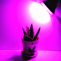 E27 36W 18Red 18Blue LED Horticulture Grow Lights Garden Flowering Growth Plant Lamp Hydroponics System Indoor