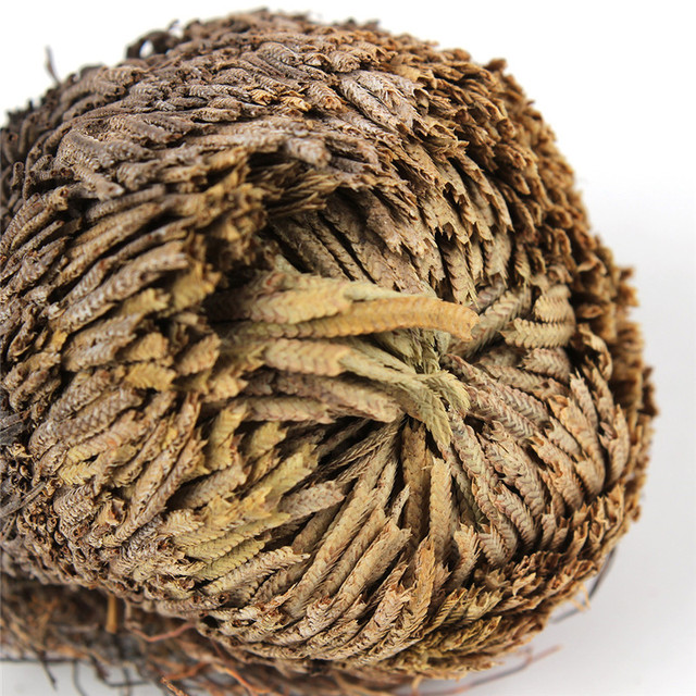 Resurrection Plant Rose Of Jericho Dinosaur Plant Air Fern Spike Moss, 1pc