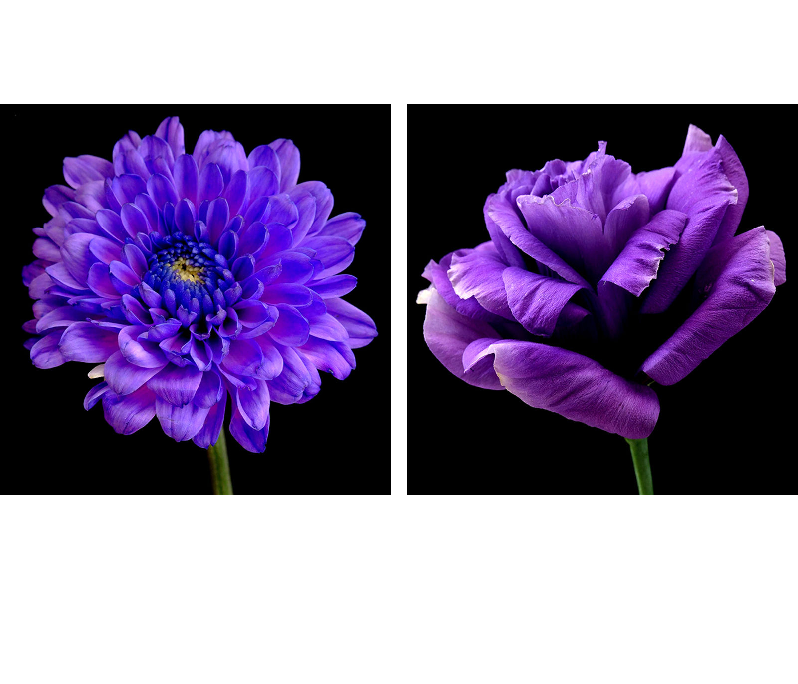 Purple Flower Wall Art compare prices on purple wall art- online shopping/buy low price