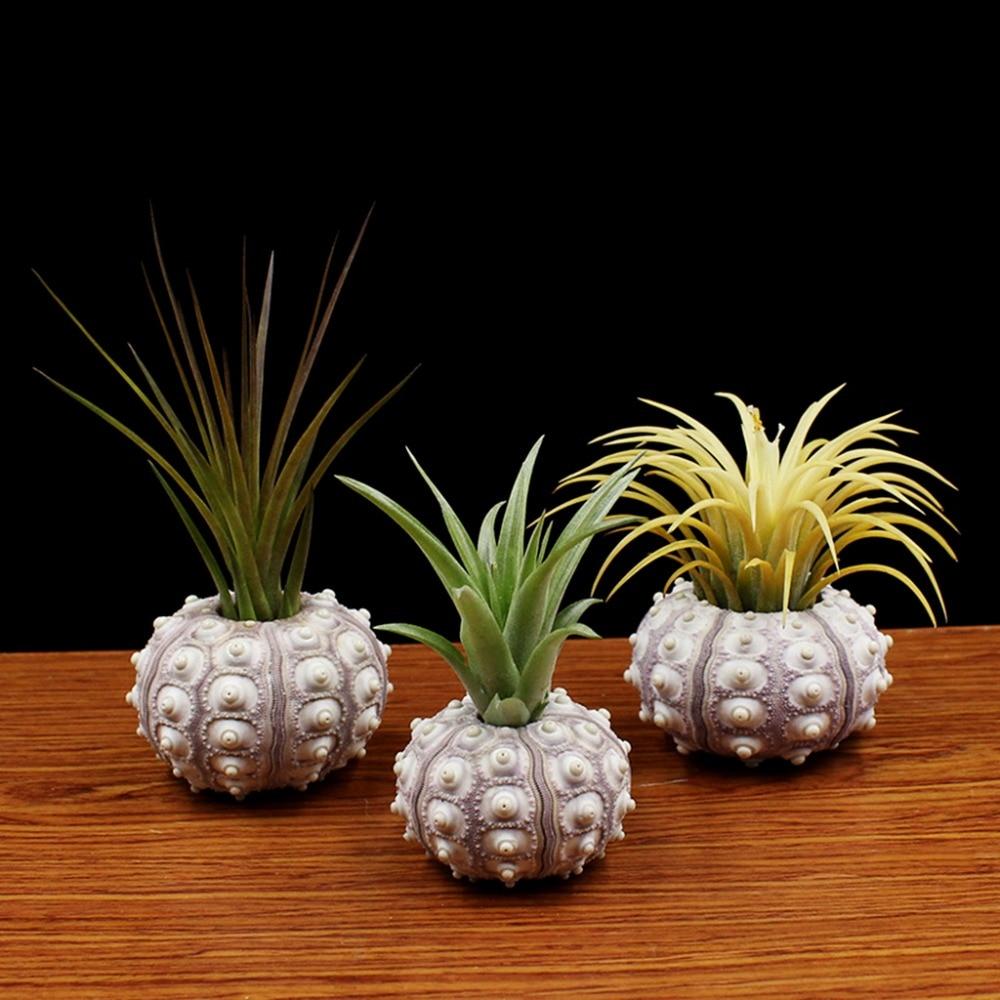 Ootdty Air Plants Sea Urchin Tabletop Tillandsia Holder Flower Pot Miniature Gardening Decorations