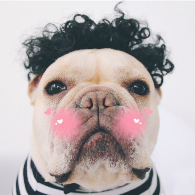 Funny Dog Wig Curly Hair for Halloween Christmas Festival Dog Costume Decorations Accessories Pug French Bulldog 10d40