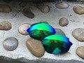 Nova Substituição Verde Lentes Polarizadas para Romeo 2.0 Óculos De Sol Oakley 100% UVA & UVB