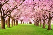 Rosa Floral Do Casamento De Árvores Da Flor De Cerejeira Flores da Primavera Verde Grama Natureza Cênica Cenários de Fotografia Crianças Foto Fundo