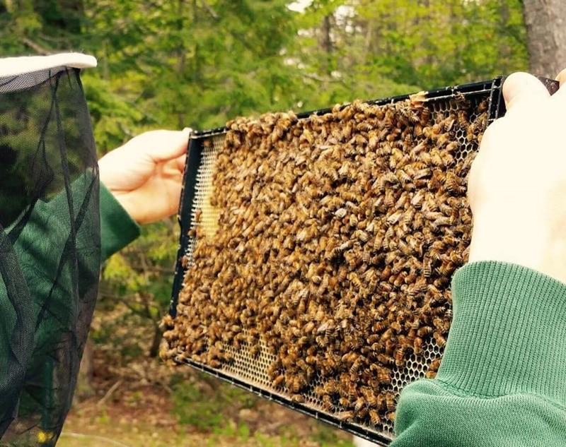 10 unids apicultura marco plástico de la colmena con peine Fundación ...